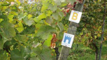 Markierung Burgensteig und Blütenweg an Reben
