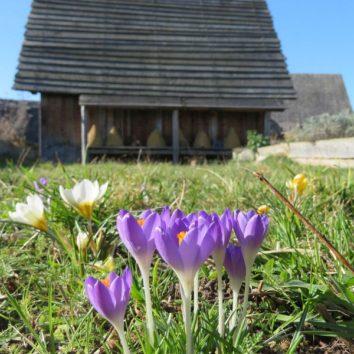 Frühling im Freiluflabor Lauresham Lorsch